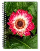 Red And White Gerber Daisy Spiral Notebook