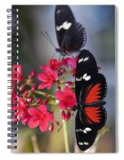 Red And White Longwing Butterflies  Spiral Notebook