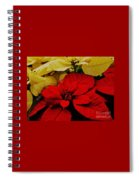 Red And White Poinsettias Spiral Notebook