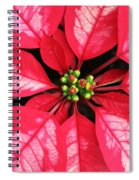 Red And White Poinsettia Spiral Notebook
