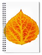 Red And Yellow Aspen Leaf 6 Spiral Notebook