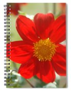 Red And Yellow Beauty Spiral Notebook