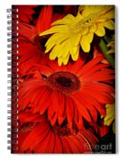 Red And Yellow Glory - The Flowers Of Summer - Gerbera Daisies Spiral Notebook