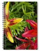 Red And Yellow Lilly Flowers In The Garden Spiral Notebook