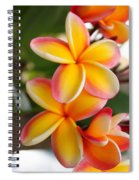 Plumeria Smoothie Spiral Notebook