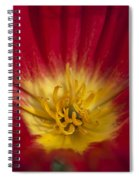 Red And Yellow Poppy 1 Spiral Notebook