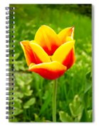 Red And Yellow Tulip Spiral Notebook