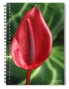 Red Anthurium #2 Spiral Notebook