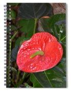 Red Anthurium Flower Spiral Notebook