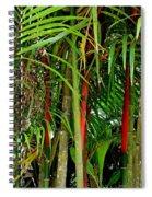 Red Bamboo Spiral Notebook