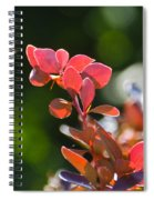 Red Barberry Spiral Notebook