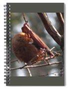 Red Bat Roost Spiral Notebook
