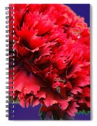 Red Beauty Carnation Spiral Notebook