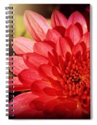 Red Beauty Welcomes The Sun - Flowers Of Summer Spiral Notebook