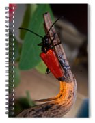 Red Beetle Rising Spiral Notebook