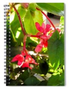 Red Begonia Peaking Through The Leaves Spiral Notebook