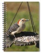 Red Bellied Woodpecker - Melanerpes Carolinus Spiral Notebook