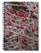 Red Berries Covered In Snow Spiral Notebook