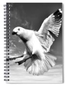 Red Billed Seagull In Black And White Spiral Notebook