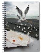 Red-billed Seagulls Spiral Notebook