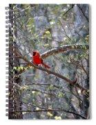 Red Bird In Dogwood Spiral Notebook