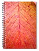 Red Blackberry Leaf Spiral Notebook