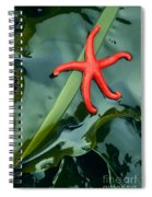 Red Bloodstar Spiral Notebook