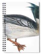 Red-breasted Merganser Spiral Notebook