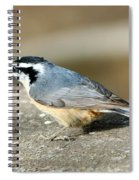 Red-breasted Nuthatch Spiral Notebook