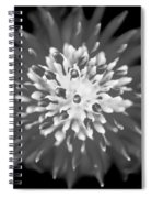 Red Bromeliad Painted Bw   Spiral Notebook
