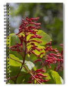 Red Buckeye - Aesculus Pavia - Wildflowers Spiral Notebook