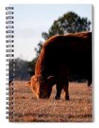 Red Bull Spiral Notebook