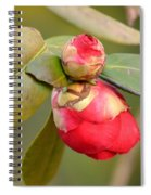 Red Camelia Buds Spiral Notebook