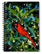 Red Cardinal 1 Spiral Notebook