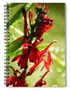 Red Cardinal Flower Spiral Notebook