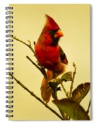 Red Cardinal No. 2 - Kauai - Hawaii Spiral Notebook