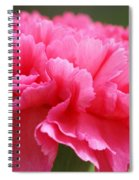 Red Carnation  Spiral Notebook