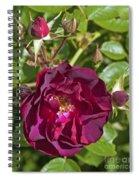 Red Climbing Rose Spiral Notebook