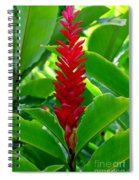 Red Cone Ginger Spiral Notebook