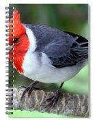 Red Crested Cardinal Spiral Notebook