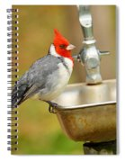 Red Crested Cardinal Spiral Notebook