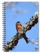 Red Crossbill Finch Spiral Notebook
