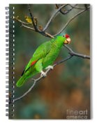 Red-crowned Amazon Spiral Notebook