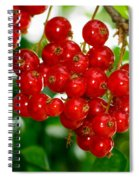 Red Currants Ribes Rubrum Spiral Notebook