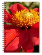 Red Dahlia Coccinea Spiral Notebook