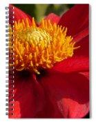 Red Dahlia Starlet Spiral Notebook