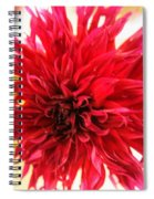 Red Dahlia Spiral Notebook