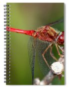 Red Dragon Spiral Notebook