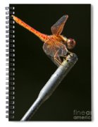 Red Dragonfly On An Antenna Spiral Notebook