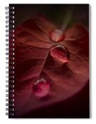 Red Drops Spiral Notebook